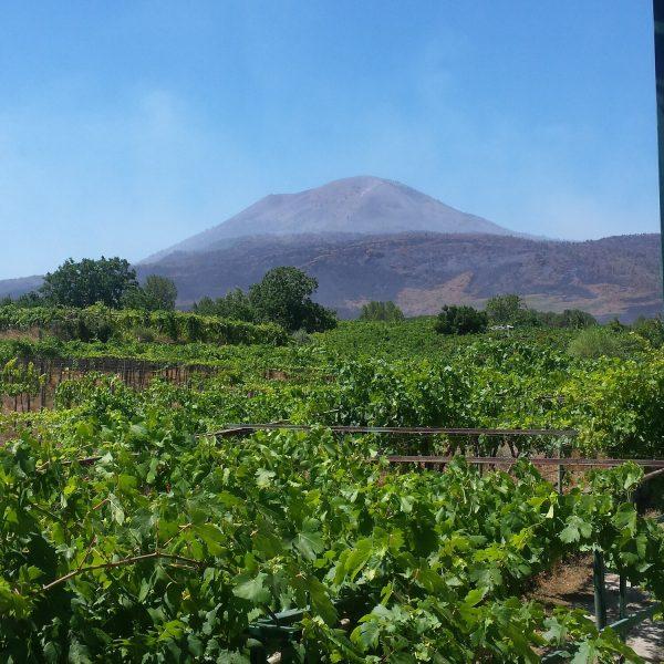 Vesuvius and Winery Tour
